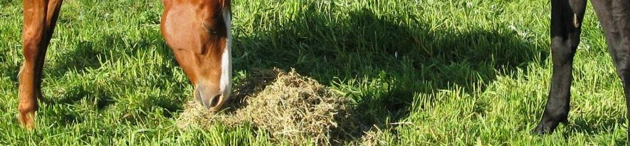 Alfalfa-Hay