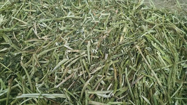 oat-hay